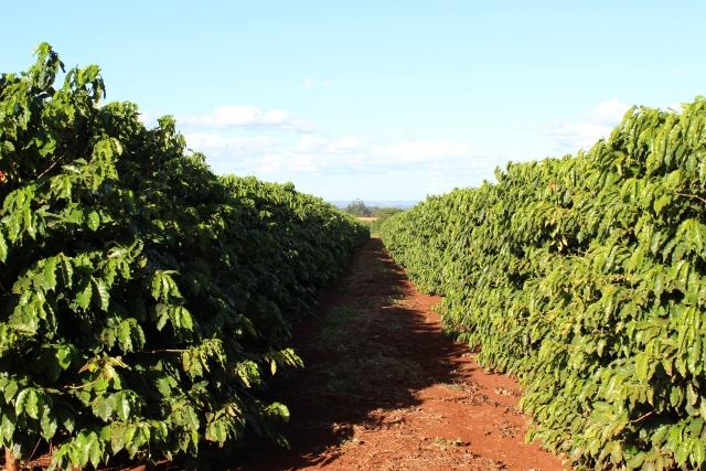 Fazenda Palmeira_santa Mariana_Rota do Café