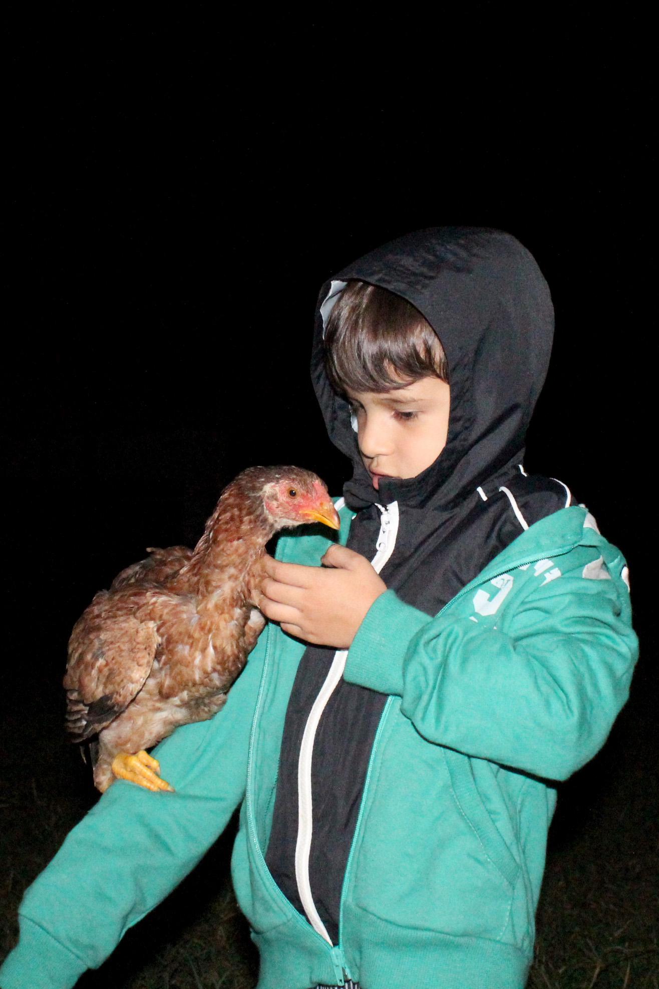 Sitio_matias_sapopema_parana_galinha