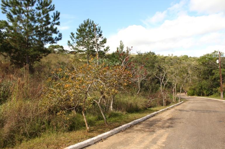 Parque da Barreira_Vale do Itararé.JPG